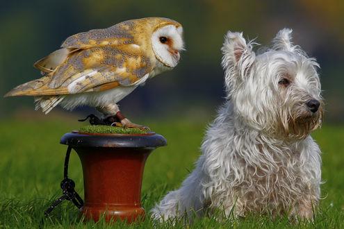 Обои Сова и собака смотрят в сторону