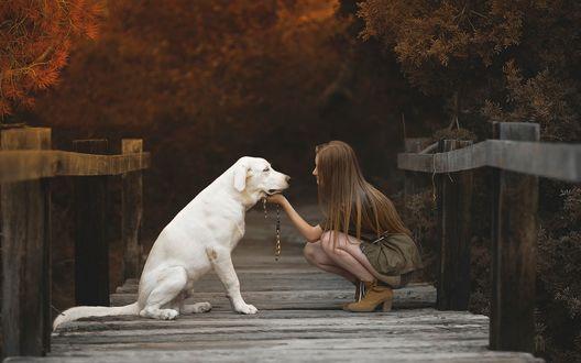 Обои Девушка с белой собакой на мосту