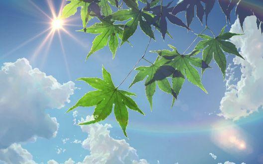 Обои Зеленая листва на фоне голубого неба, кадр из аниме Сад Изящных Слов / The Garden Of Words