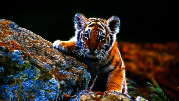 Обои Маленький тигренок на камнях