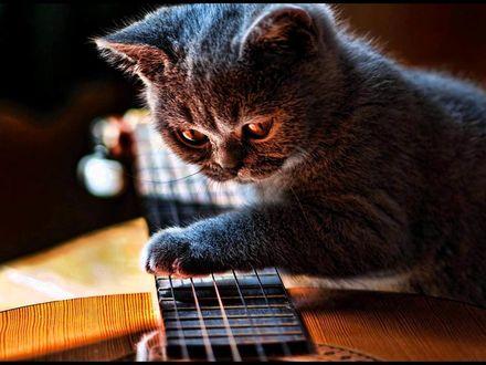 Обои Котенок держит лапку на грифе гитары