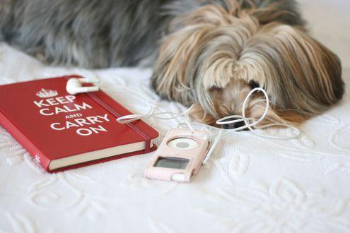 Обои Маленькая пушистая собачка лежит на постели, рядом лежит ежедневник и плеер