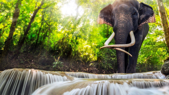 Обои Слон стоит в реке на фоне леса