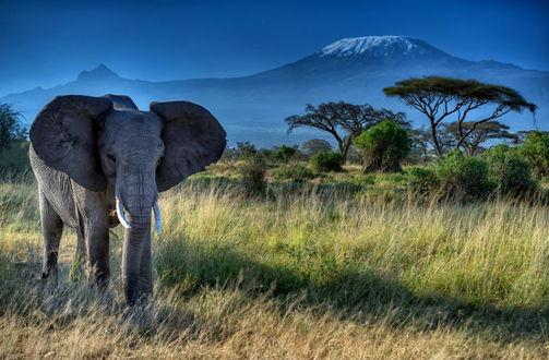 Обои Слон на фоне деревьев и гор