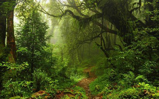 Обои Сказочный лес с тропой и туманом