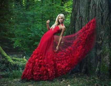 Обои Блондинка в красном платье позирует в лесу у дерева