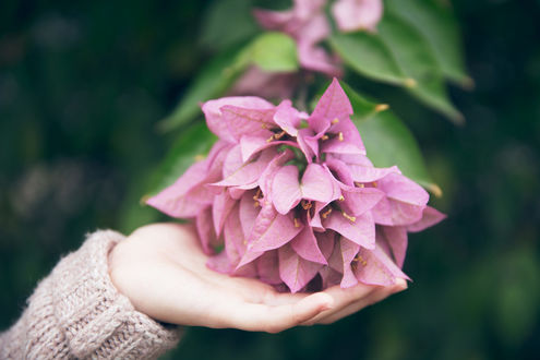 Обои Цветы в женской руке