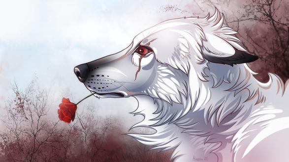 Обои Волк с красной розой в пасти, by Alaiaorax