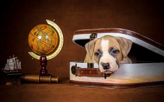 Обои Бигль путешественник лежит в чемоданчике, рядом глобус, подзорная труба, макет корабля
