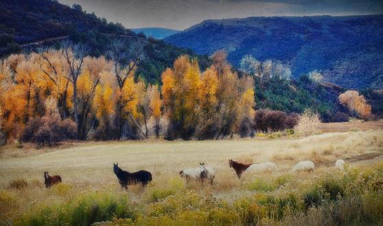 Обои Лошади пасутся в поле