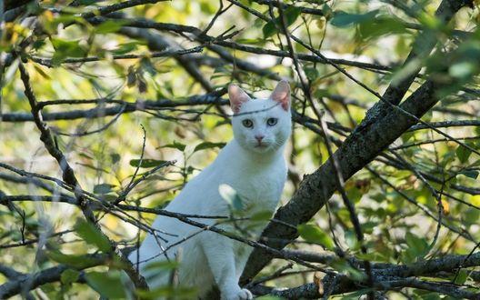 Обои Белая кошка сидит на дереве