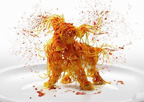 Обои Лохматый пес из спагетти, стоя на тарелке разбрызгивает красный кетчуп, тряся всем телом