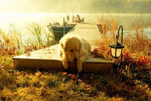 Обои Золотистый ретривер лежит на пирсе у туманного озера, рядом с фонарем и лодкой