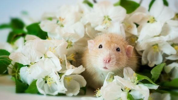 Обои Мышка в белых цветах