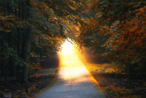Обои Солнечный свет освещает дорогу, фотограф Janek SedlГЎЕ™