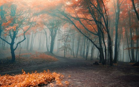 Обои В лесу деревья с желтыми и красными листьями стоят в тумане
