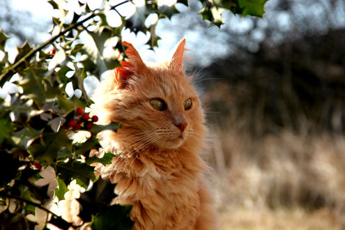 Пушистый кот сидит