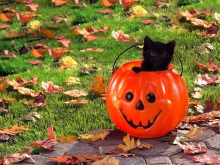 Обои Черный котенок сидит в тыкве