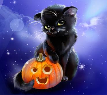 Обои Черный котенок с тыквой хэллоуин на фоне ночи
