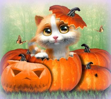 Обои Милый котенок в тыкве хэллоуин на фоне леса