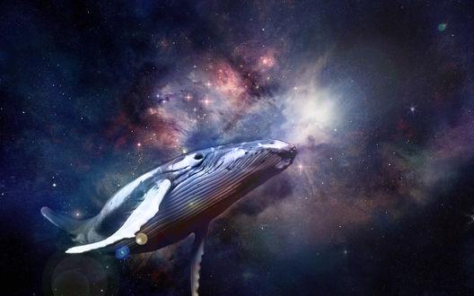 Обои Кит парит в космосе