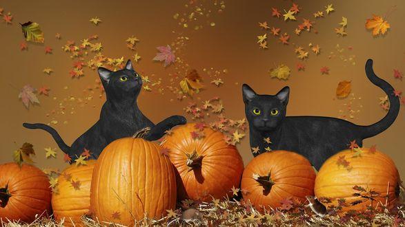 Обои Две черные кошки стоят возле тыкв под падающими осенними листьями