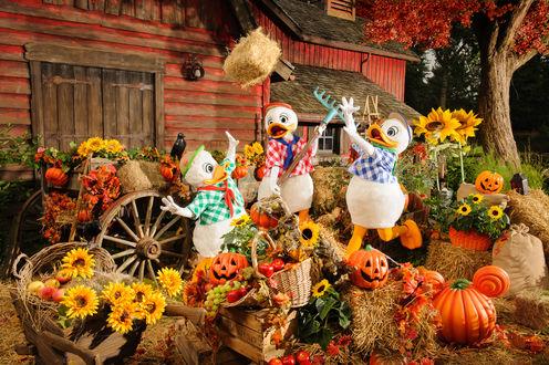 Обои Три утенка Диснейленда, среди цветов подсолнуха, осенних листьев и тыкв на Хеллоуин