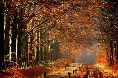 Обои Дорога в парке в солнечный осенний день