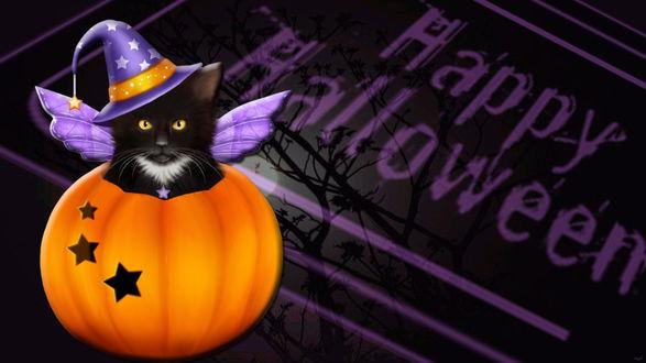Обои Черный котенок с крыльями и в шляпке в тыкве Halloween