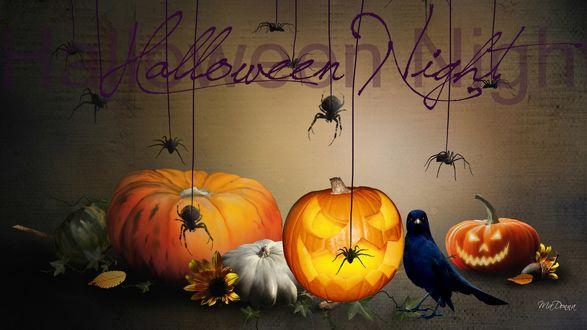 Обои Черный ворон сидит возле тыкв над которыми на паутине спускаются пауки, Halloween Night / Ночь Хеллоуина