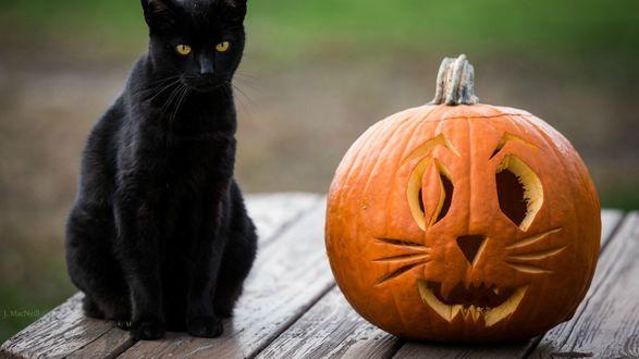 Обои Праздник Halloween, черный кот и фонарь джека