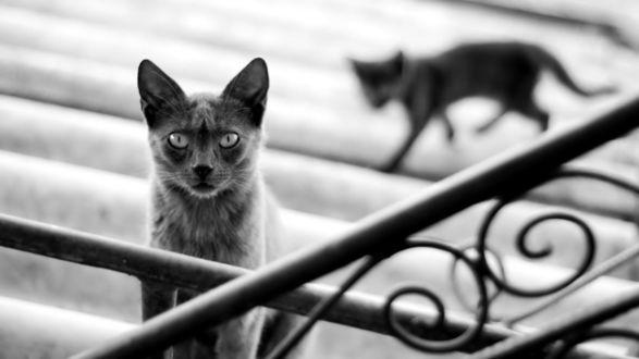 Обои Два кота на лестнице, один размыт другой внимательно за кем- то следит