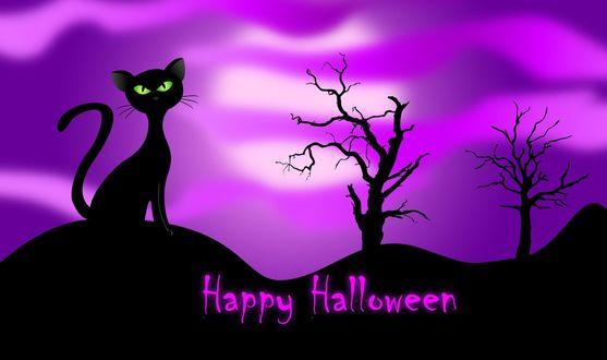 Обои Happy Halloween / счастливого Хэллоуина, черный, зеленоглазый кот на розовом фоне
