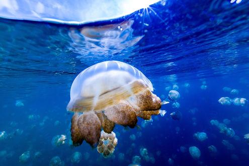 Обои Медузы под водой