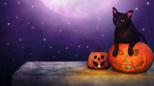 Обои Черный котенок в тыкве Хэллоуин, на фоне ночного неба