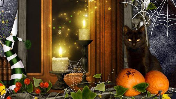 Обои В доме около окна сидит черная кошка, около тыквы на Хэллоуин, горят свечи, паук сидит на тыкве