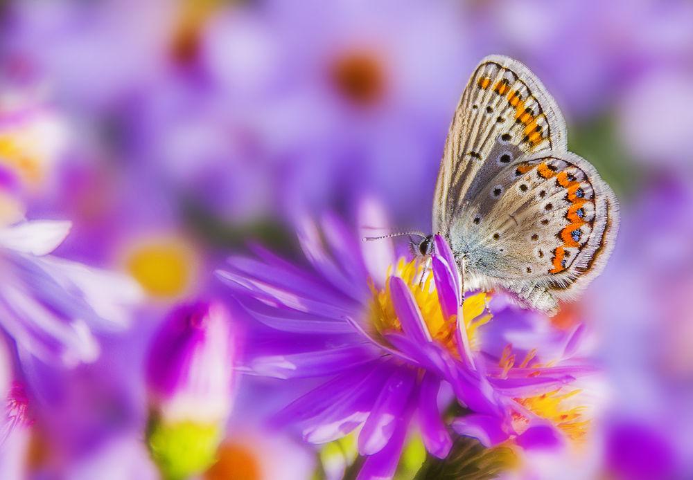 Картинки-бабочка на цветке