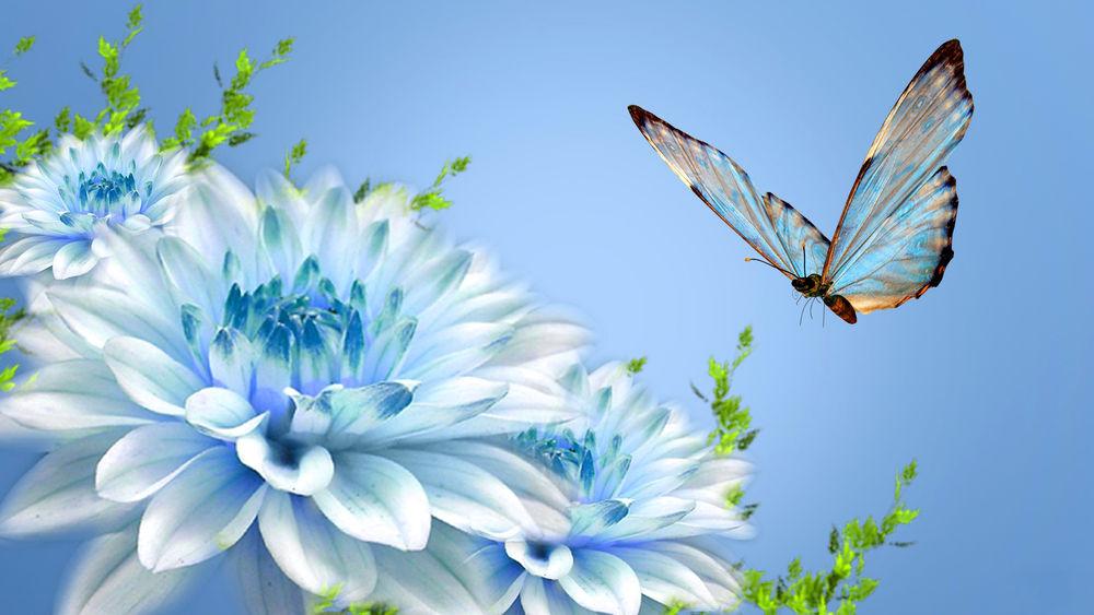 Красивые картинки на рабочий стол цветы и бабочки, класса надписями новогодняя