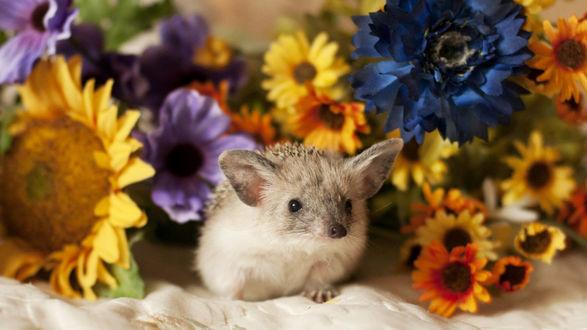 Обои Милый ушастый ежик у цветов