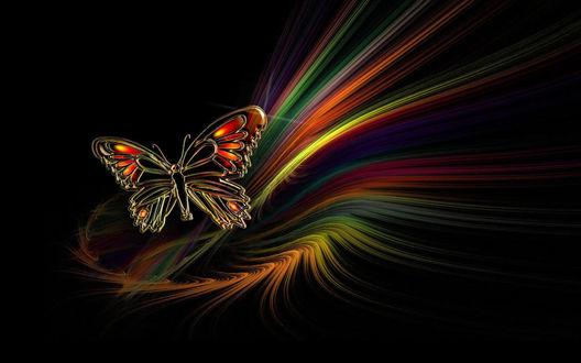 Обои Рисунок бабочки на черном фоне