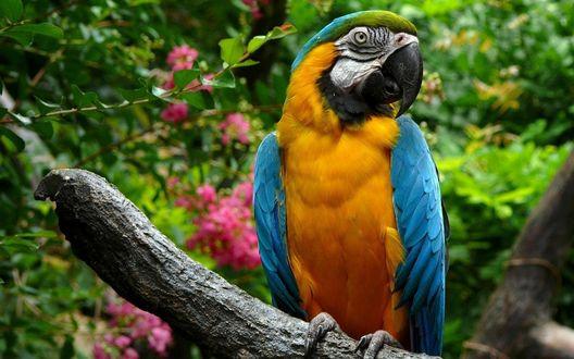 Обои Яркий попугай Ара сидит на ветке дерева, на заднем фоне видны цветы и зеленые растения