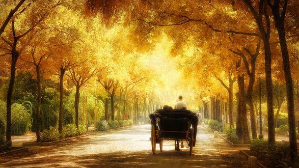 Обои Романтическая прогулка в карете по залитой солнечными лучами аллее парка