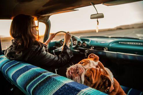 Обои Забавная собачка сидит в машине рядом со своей хозяйкой