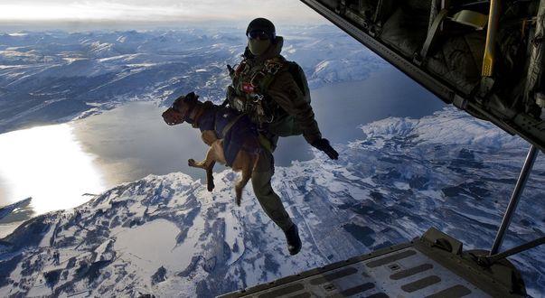 Обои Парашютист, вместе собакой, совершает прыжок с самолета