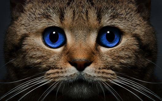 Обои Мордочка грустного котика с синими глазками