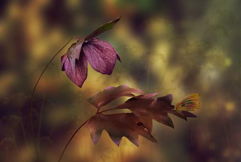 Обои Бабочка сидит на пожухлом осеннем листике, by Nataliorion