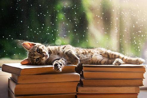 Обои Кошка лежит на книгах, возле окна с каплями воды на стекле, by BalГЎzs TГіth