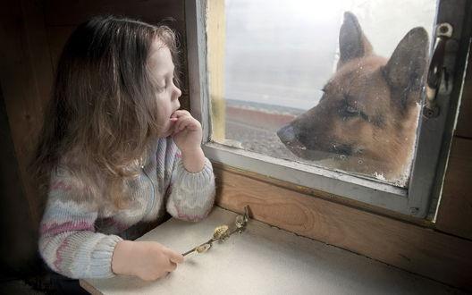 Обои Маленькая девочка с вербой в руках, смотрит в окно на собаку породы немецкая овчарка