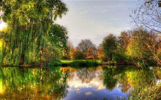 Обои Ивы, отражающиеся в лесном озере
