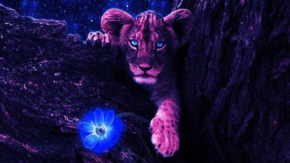Обои Молодой львенок с голубыми глазами, лежит на ветке дерева с голубым цветком в лапе
